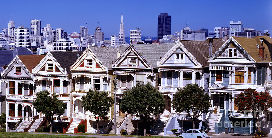 Painted Ladies Photograph by Ron Smith