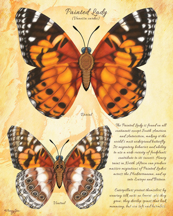 Butterfly Painting - Painted Lady Butterfly by Tammy Yee