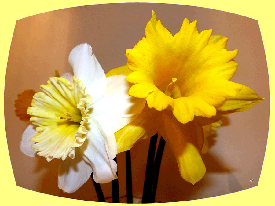 Painted Okanagan Daffodils Digital Art - Painted Okanagan Daffodils by Will Borden