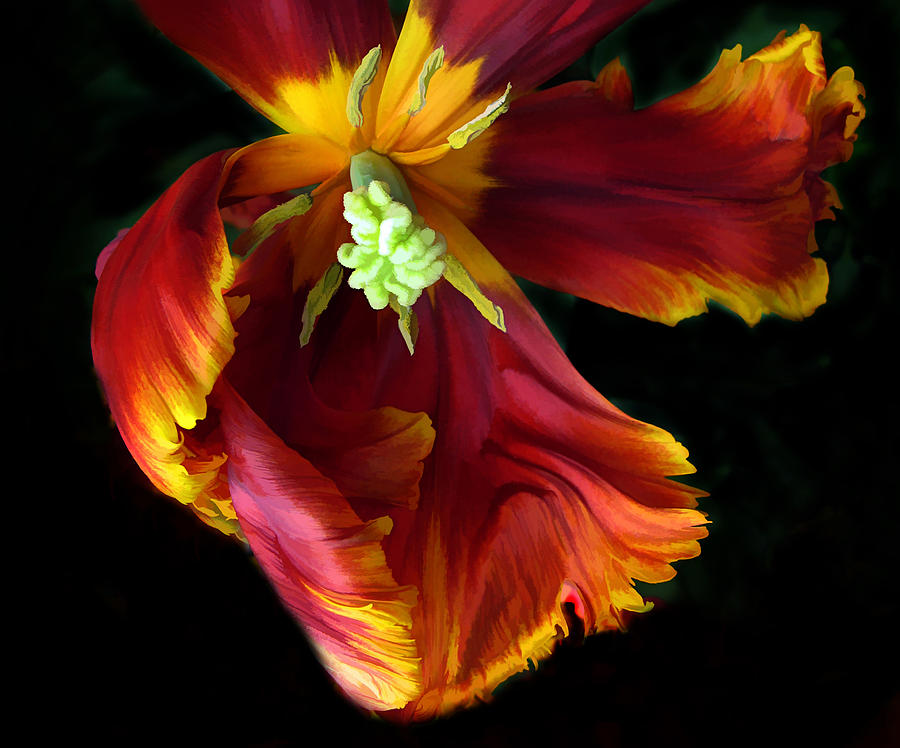 Flowers Photograph - Painted Parrot Petals by Jessica Jenney