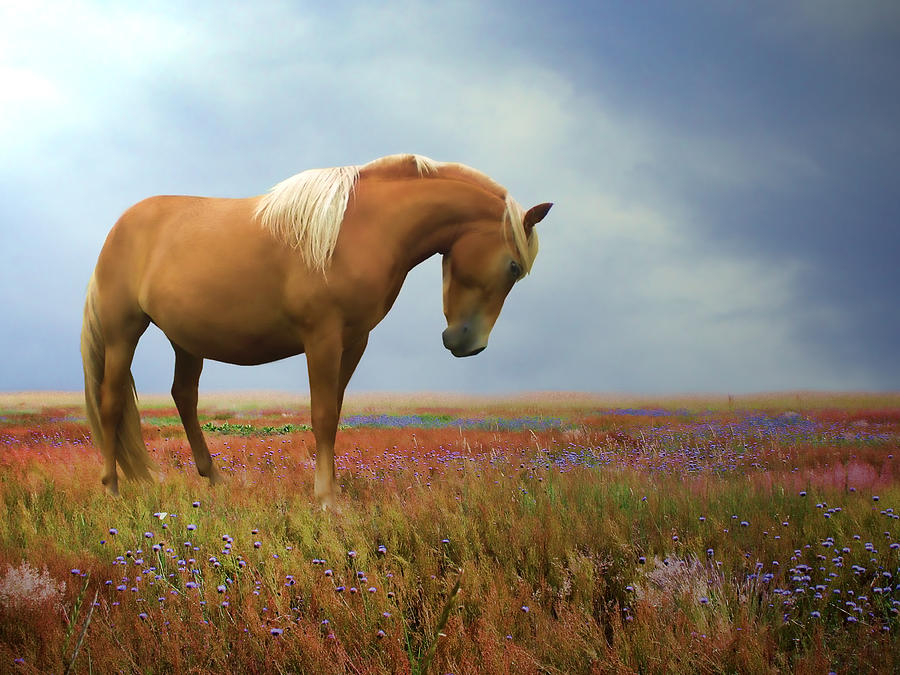 Wild Horses Photograph - Painted Pastures by Sharon Lisa Clarke