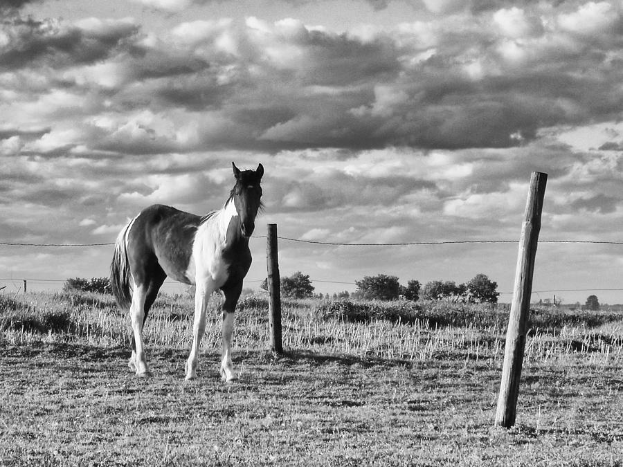 Black And White Photograph - Painted Pony by Tom Druin