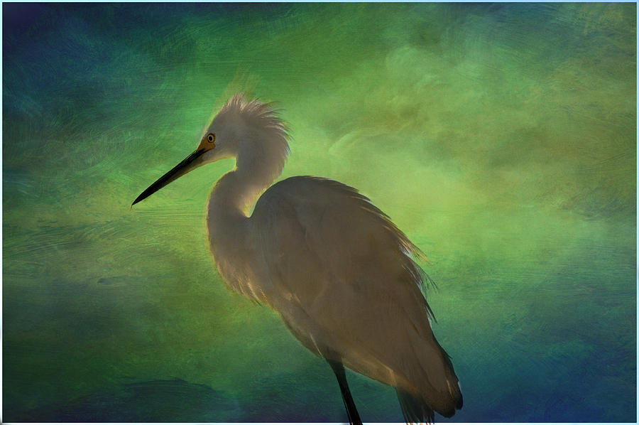 Egret Photograph - Painted Sky by Eagle  Finegan