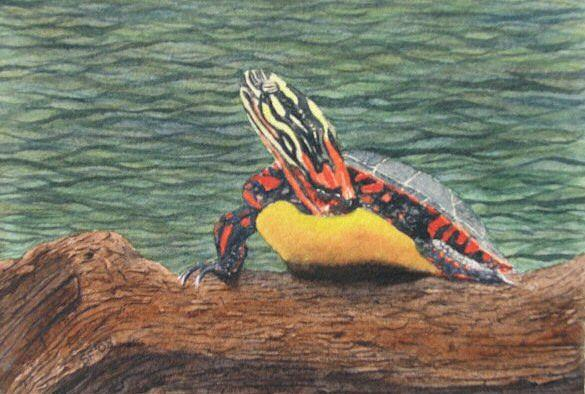 Turtle Painting - Painted Turtle Baby by Sharon Farber