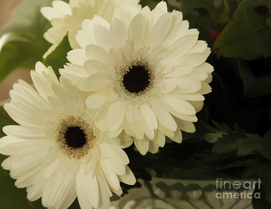Flowers Photograph - Painted White Flowers by Nancy Dempsey