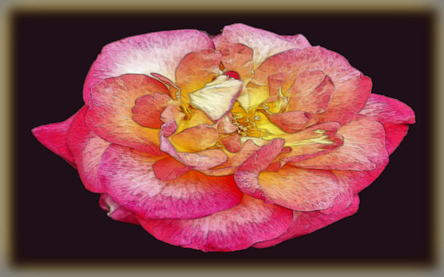 Rose Photograph - Painted Rose by Dennis Dugan
