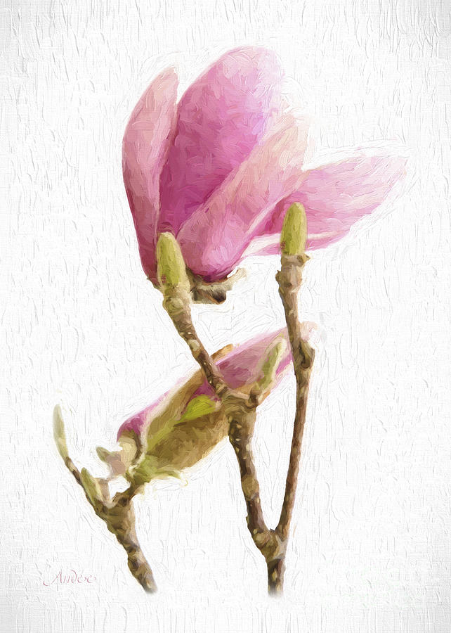 Painterly Pink Magnolia Mixed Media by Andee Design
