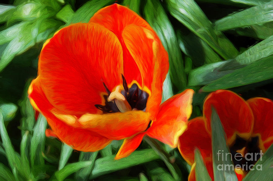 Painterly Red Tulips Photograph by Andee Design