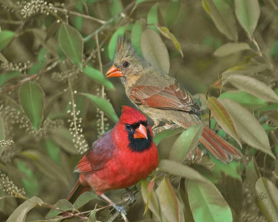 Nature Photograph - Pair Of Cardinals by Helen Ellis