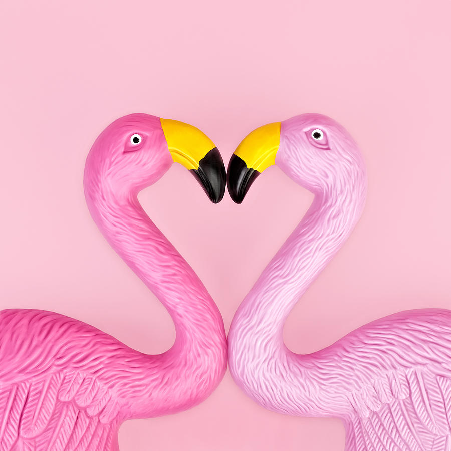 Pair Of Flamingos Photograph by Juj Winn