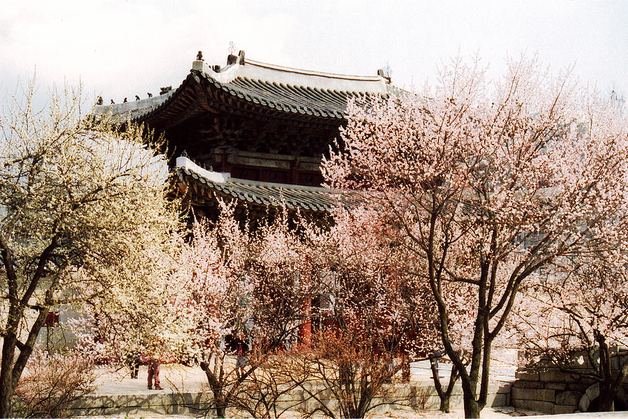 South Korea Photograph - Palace in Spring by Jessica Wakefield
