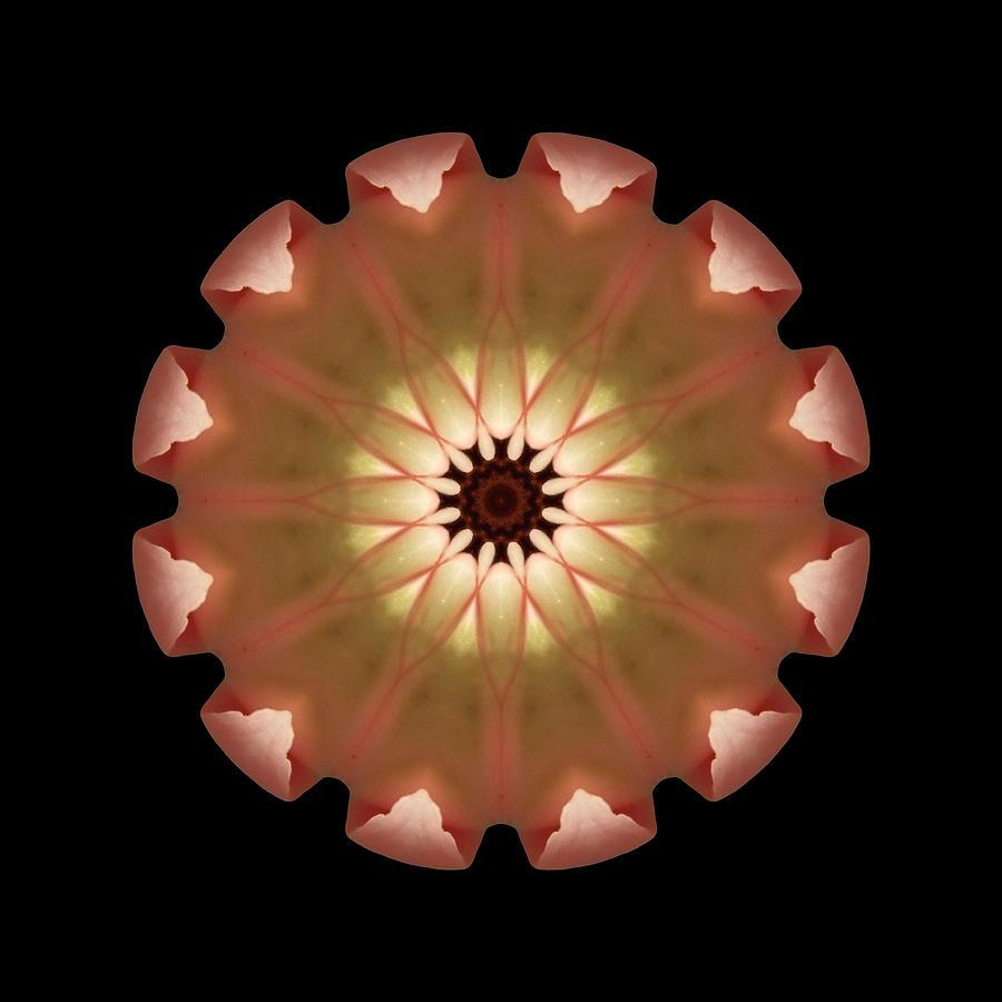 Flower Photograph - Pale Pink Tulip Flower Mandala by David J Bookbinder