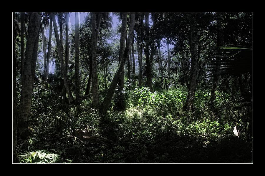 St Lucie County Photograph - Paleo Hammock Preserve by Richard Hemingway
