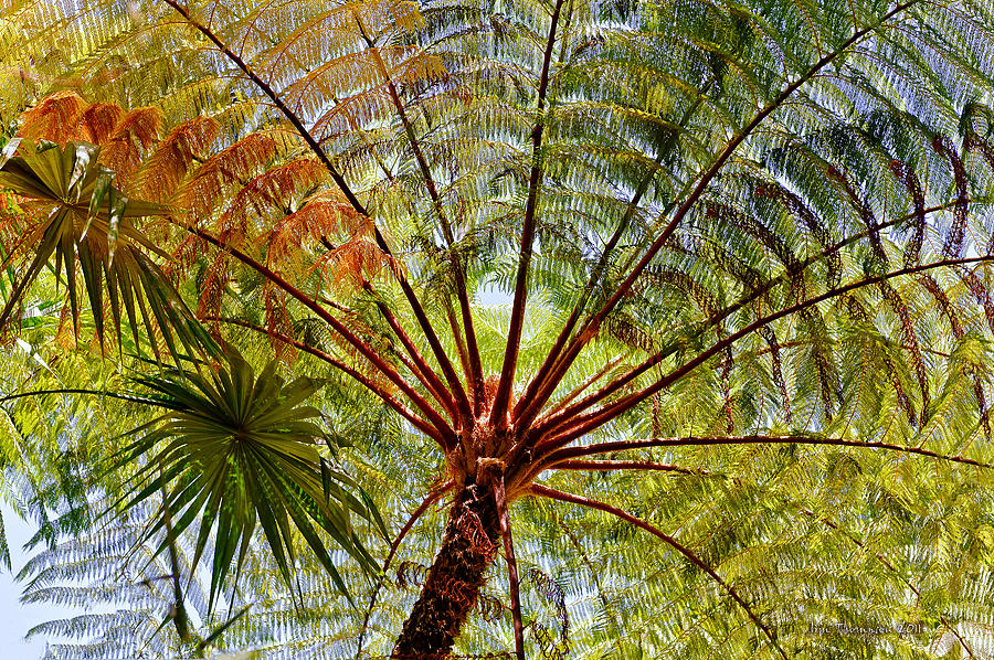 Palm Tree Photograph - Palm Canopy by Jim Thompson