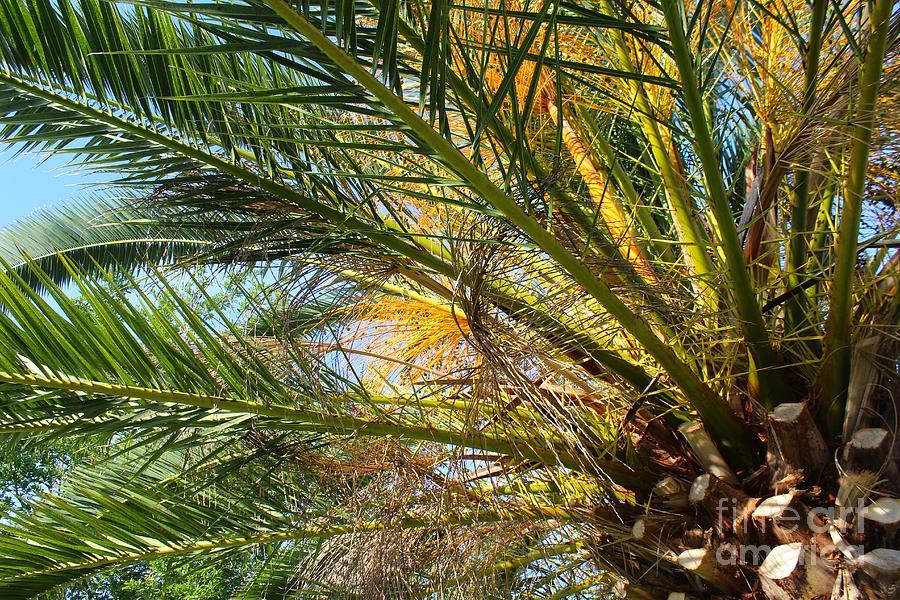 Palms Photograph - Palm Canopy by Jeanne Forsythe & Palm Canopy Photograph by Jeanne Forsythe