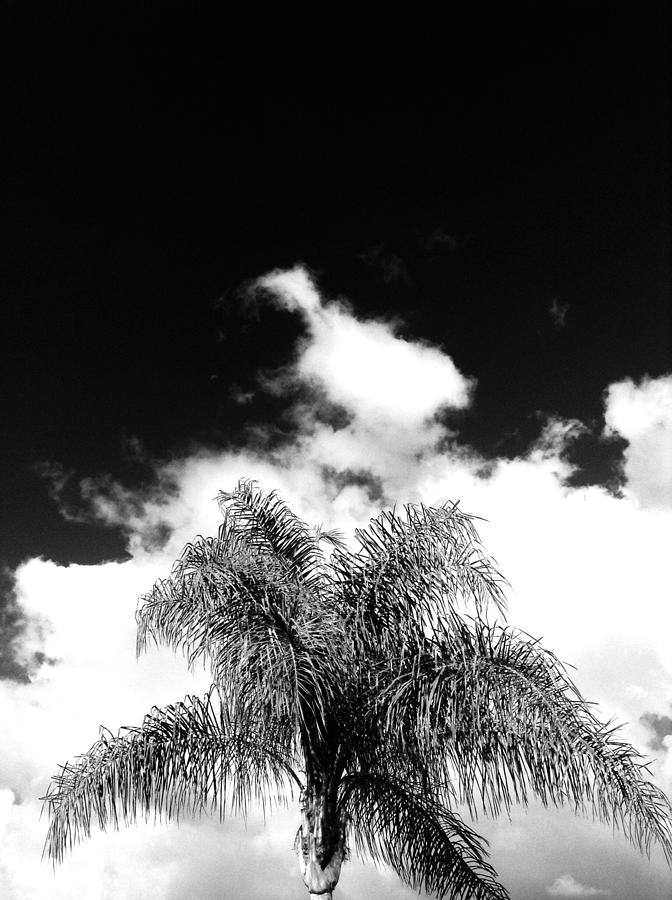 Palm Tree Photograph - Palm Cloud  by Natalya Karavay