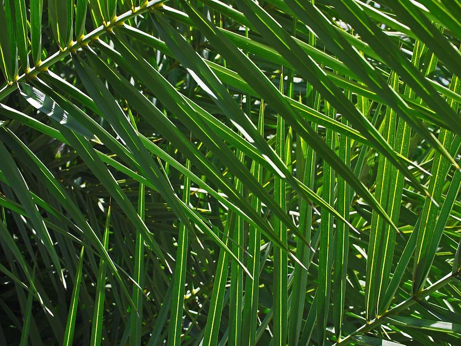 Green Photograph - Palm Crosshatch by Rona Black