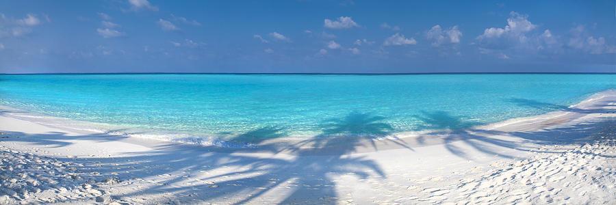 Tropical Photograph - Palm Escape by Sean Davey