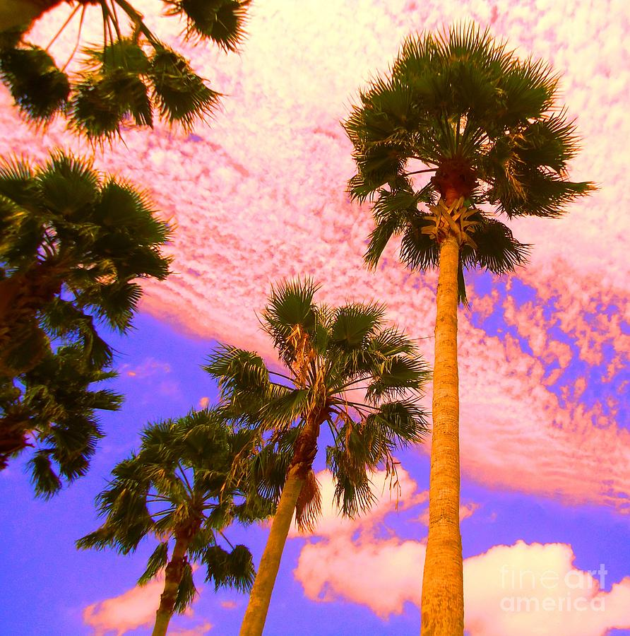 Nature Photograph - Palm In The Clouds by Ann Johndro-Collins