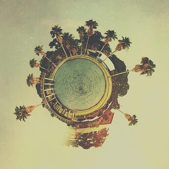 Planet Photograph - Palm Luv by Blake Fountain