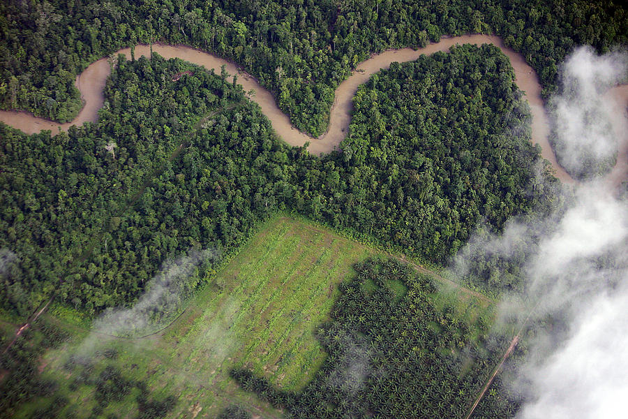Palm Oil Plantation Photograph by Photography by Mangiwau