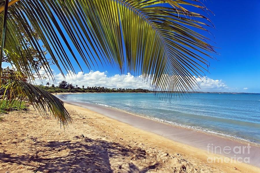 Atlantic Ocean Photograph - Palm Shadow II by George Oze