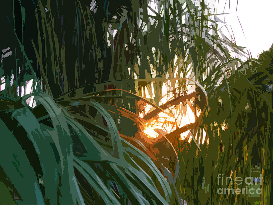 Palm Tree Photograph - Palm Sunset by Alan Metzger