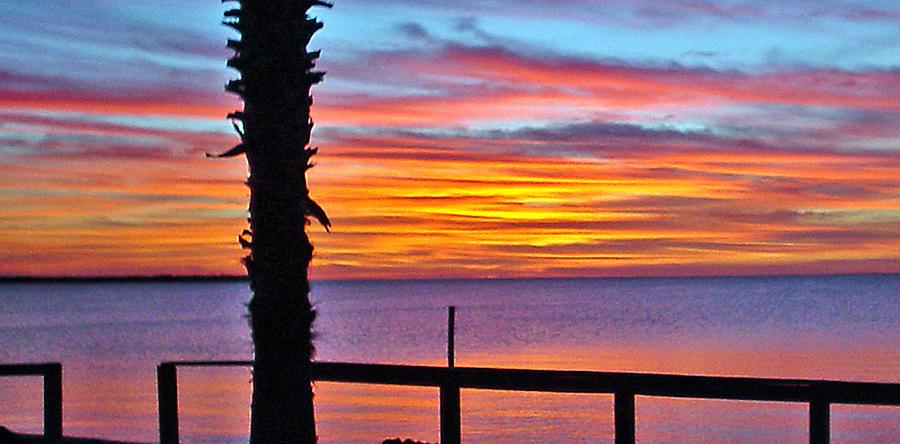 Sunset Photograph - Palm Sunset by Norman Johnson
