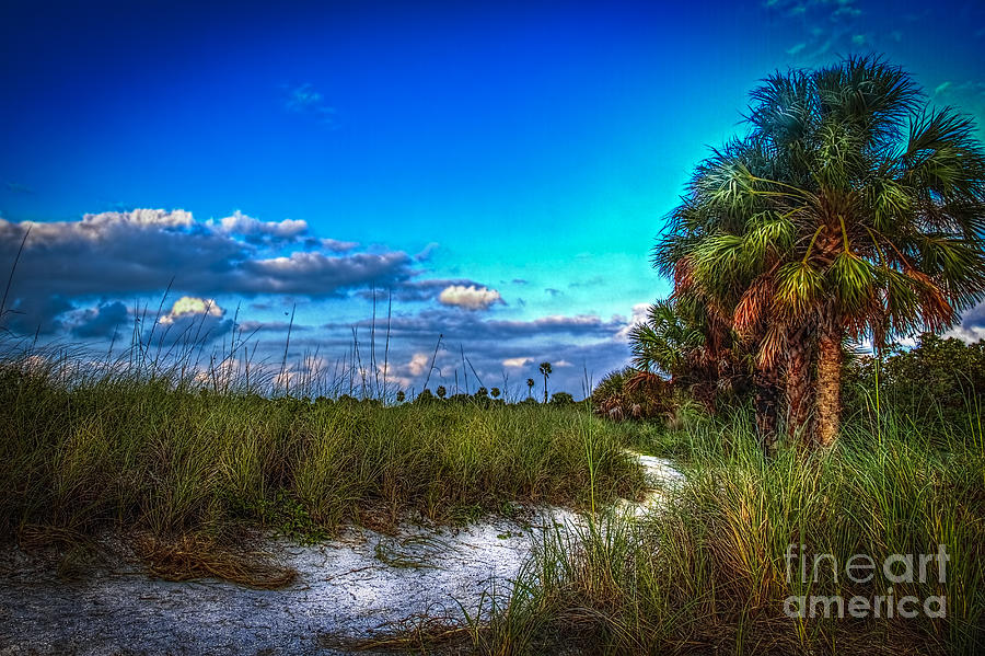 Palmetto Palm Photograph - Palm Trail by Marvin Spates