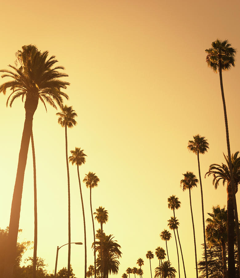 Palm Tree At Sunset On Beverly Hills Photograph by Franckreporter