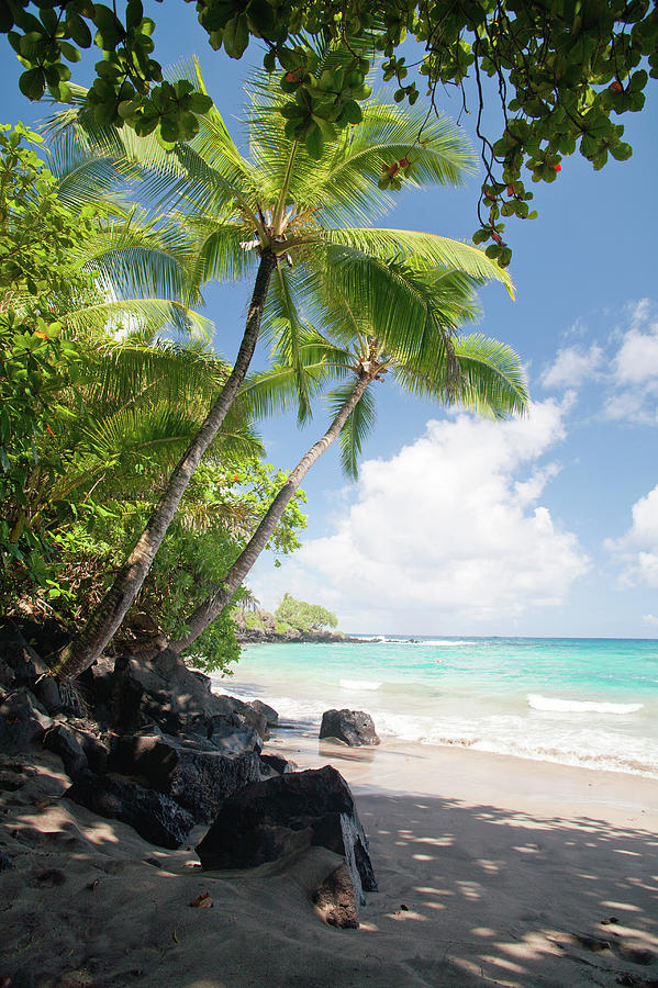 Palm Tree Beach Photograph by M Sweet
