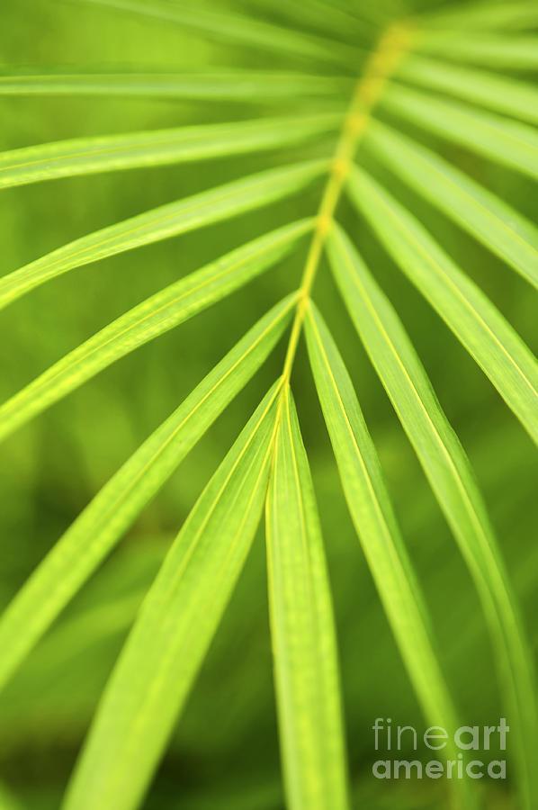 Palm Photograph - Palm Tree Leaf by Elena Elisseeva