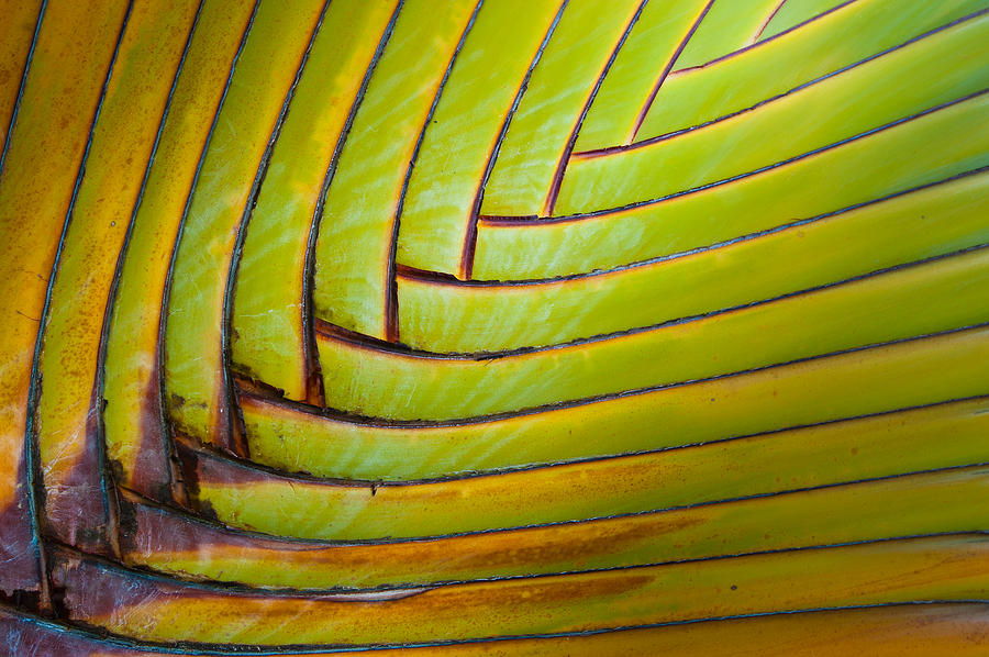 Green Photograph - Palm Tree Leafs by Sebastian Musial