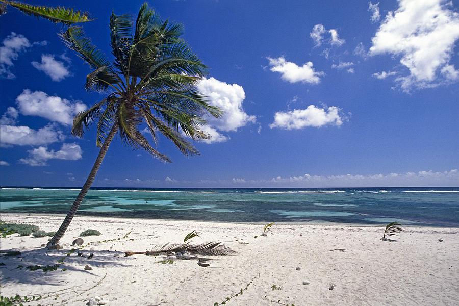 Palm Tree On A Tropical Beach Cayman Islands Photograph By