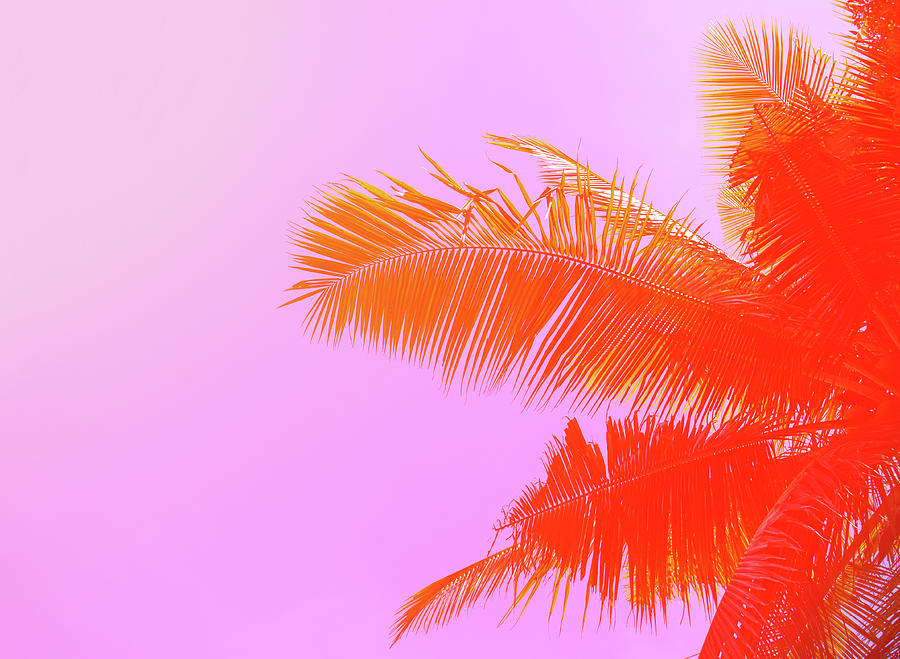 Palm Tree On Sky Background. Palm Leaf Photograph by Slavadubrovin