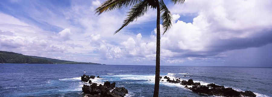 Color Image Photograph - Palm Tree On The Coast, Honolulu Nui by Panoramic Images