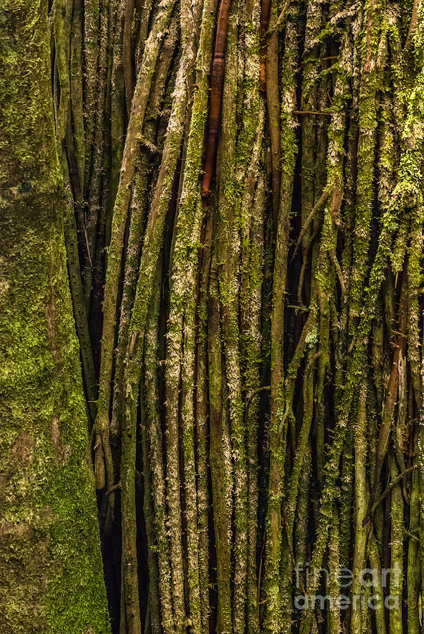 Big Island Photograph - Palm Tree Roots 1 by Al Andersen