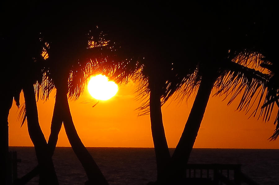 Palm Trees Photograph - Palm Tree Silhouette At Sunset by Brooke Trace