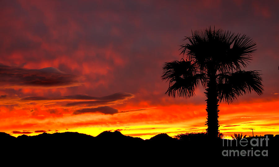 Sunrise Photograph - Palm Tree Silhouette by Robert Bales