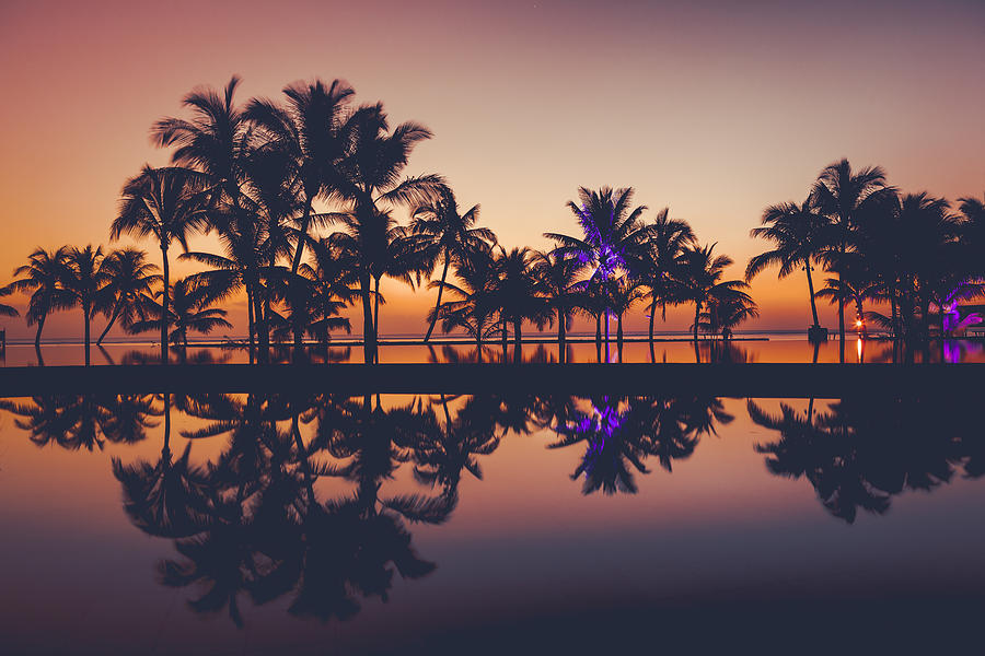 Palm Tree Silhouettes At Sunset, Africa Photograph by 35007