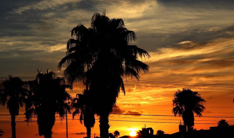Palm Tree Photograph - Palm Tree Silhouette by Candice Trimble