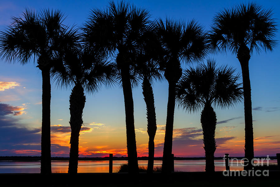 Palm Tree Sunset Jekyll Island Georgia Photograph By Dawna