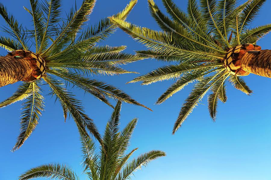Outdoors Photograph - Palm Trees Against A Blue Sky by Wladimir Bulgar