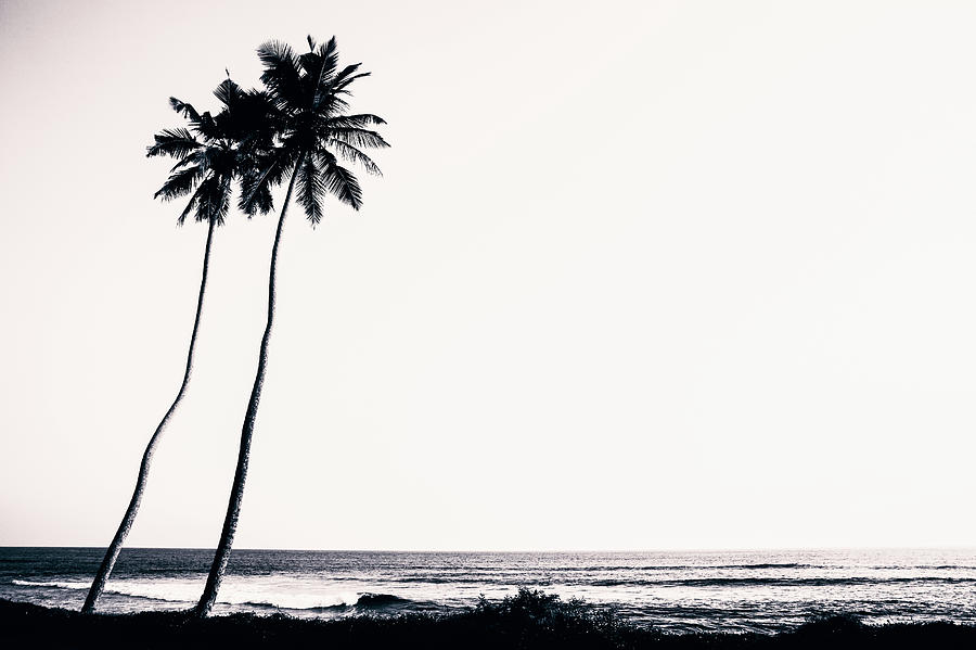 Palm Trees And Beach Silhouette Photograph by Chrispecoraro