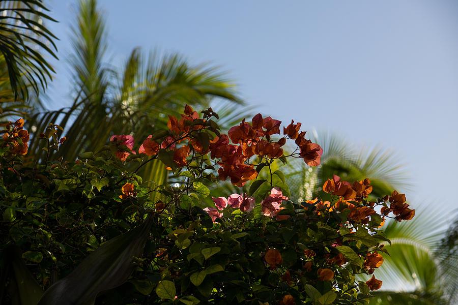Palm Trees And Tropical Flowers Photograph By Georgia Mizuleva