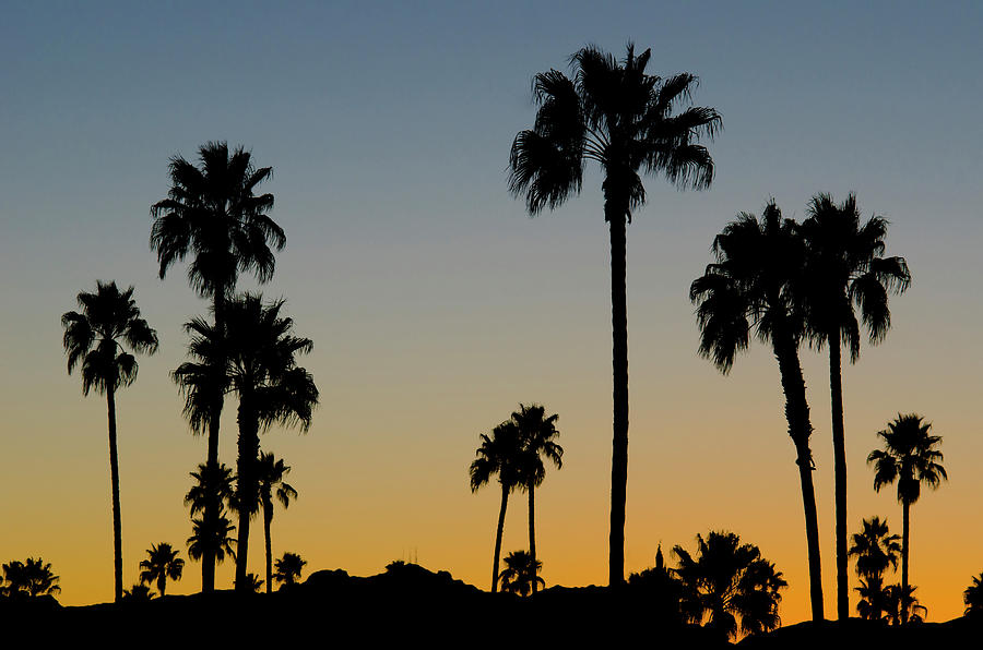 Palm Trees At Sunset Photograph by Chapin31