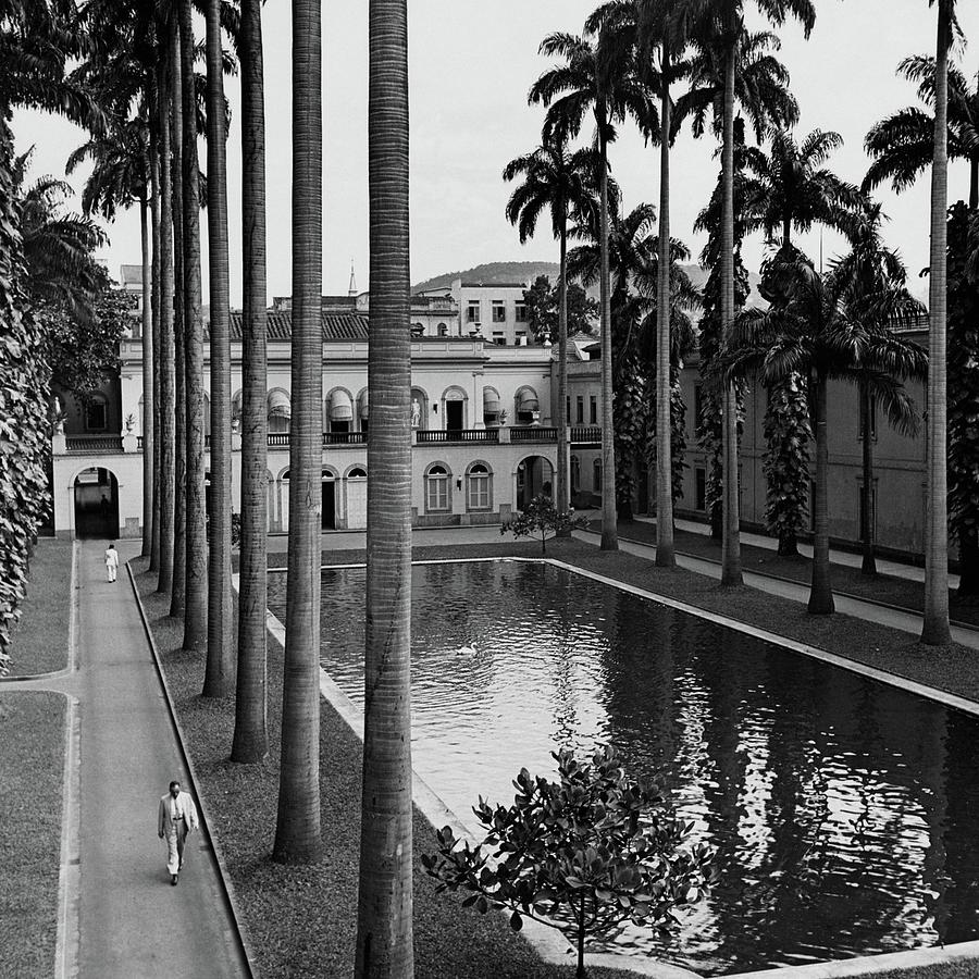Palm Trees Bordering A Pool Photograph by Luis Lemus