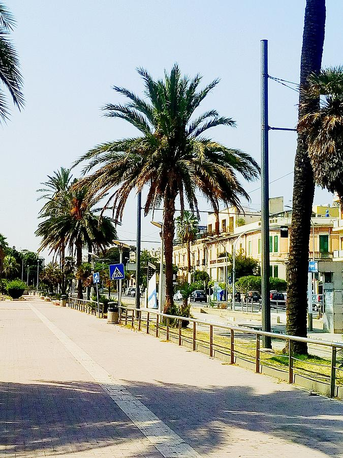 Palm Trees By Road Against Clear Sky Photograph by Domenico Bagnato / EyeEm