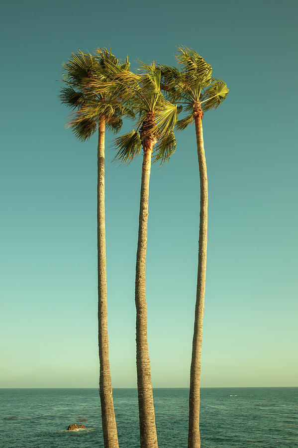 Palm Trees By The Pacific Ocean Photograph by Beth D. Yeaw