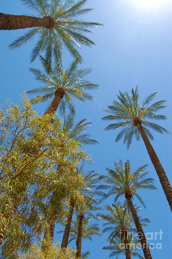 palm trees in vegas photograph by debra thompson